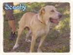 scooby 5 20160819 1362030513