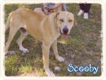 scooby 6 20160819 1097616035